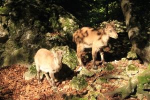 Gassirunde zum Wildpark_1